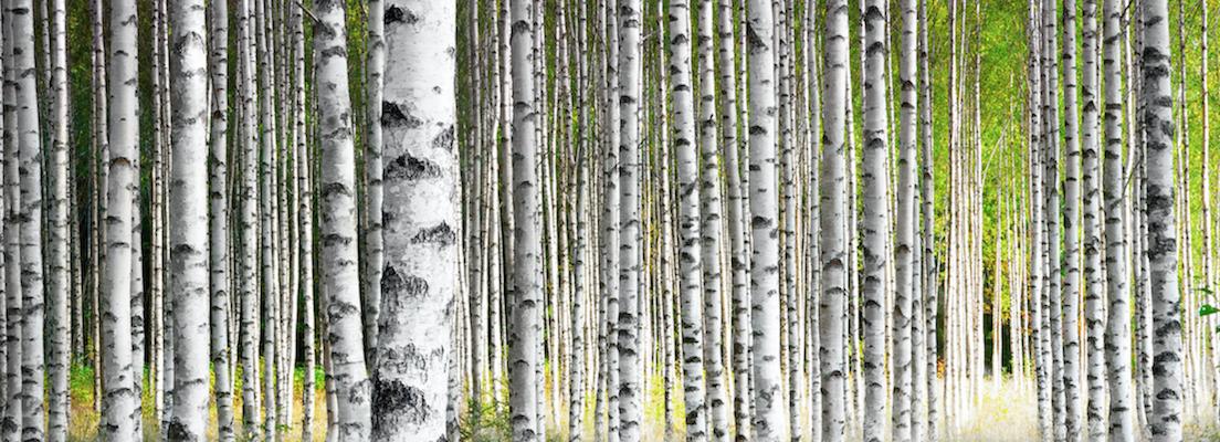 Деревья - Телетерапевт